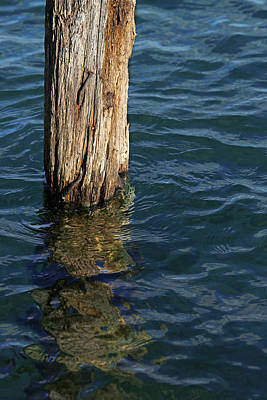 Photograph - Single Old Piling 4 by Mary Bedy