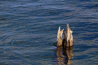 Photograph - Single Old Piling Horizontal by Mary Bedy