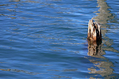 Photograph - Single Old Piling With Reflection 2 by Mary Bedy
