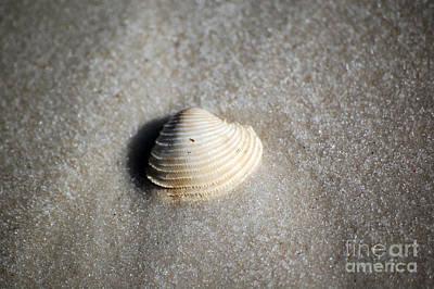Single Orange White Sea Shell Macro On Fine Sand Art Print