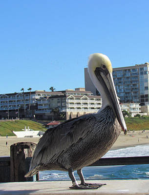 Photograph - Single Pelican On The Pier by Bonnie Muir