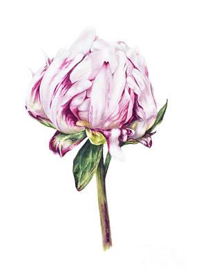 Single Flower Painting - Single Peony II by Marie Burke