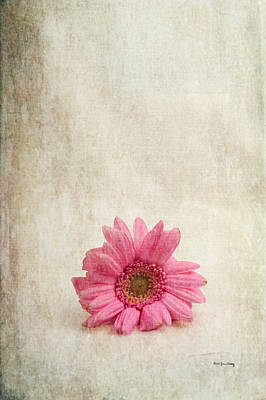 Photograph - Single Pink by Randi Grace Nilsberg