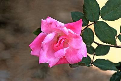 Single Red Rose Art Print by Francesco Roncone
