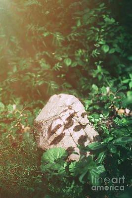 Photograph - Single Rock Standing In The Lush Foliage by Michal Bednarek