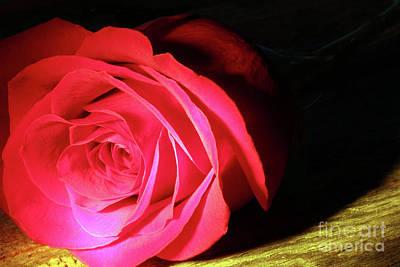 Single Rose  Art Print
