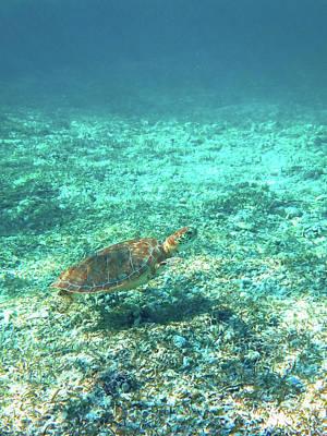 Blue Hues - Single sea turtle by Eti Reid