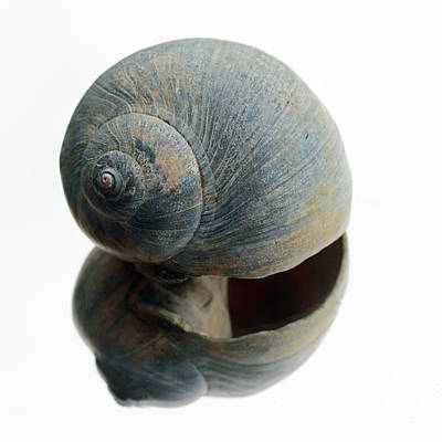 Photograph - Single Shell by Mary Haber