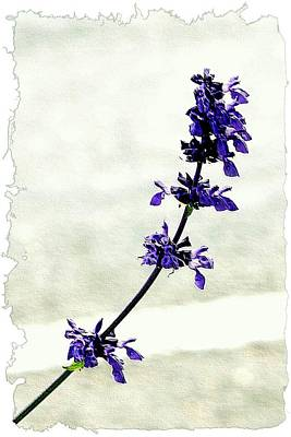 Photograph - Single Stem Bluebonnet by Ellen Barron O'Reilly