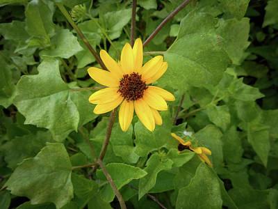 Easterseals Photograph - Single Sunflower by Kristen H