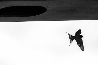 Photograph - Single Swallow Flying Under Bridge by Dan Friend