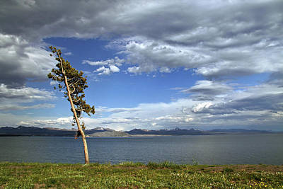 Photograph - Single Tree - 365-359 by Inge Riis McDonald