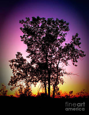 Photograph - Single Tree At Sunset by Nick Zelinsky
