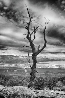Photograph - Single Tree In Black And White by Dawn Gari