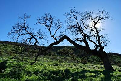 Photograph - Single Tree In Green Hills- Backlit View by Matt Harang