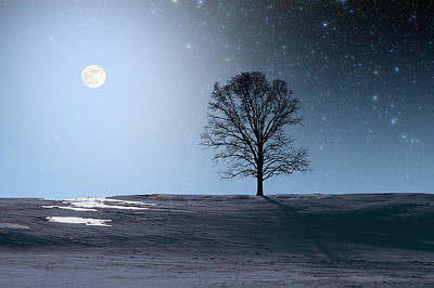 Photograph - Single Tree In Moonlight by Larry Landolfi