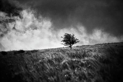 Photograph - Single Tree On Dartmoor by David Hare