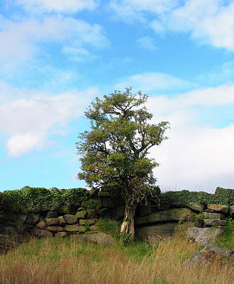 Photograph - Single Tree Standing by Philip Openshaw