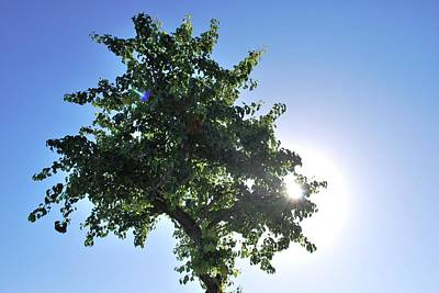 Single Tree - Sun And Blue Sky Art Print