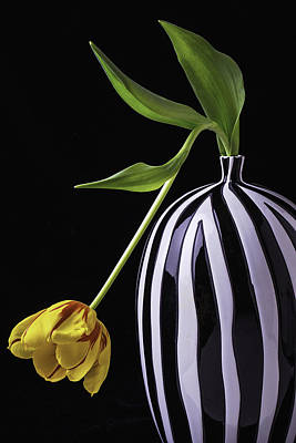 Bent Photograph - Single Tulip In Vase by Garry Gay
