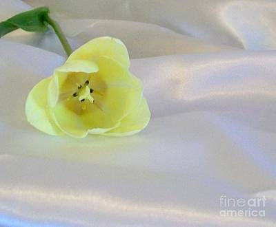 Single Tulip On Satin Art Print