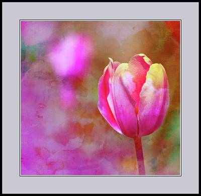 Photograph - Single Tulip by Virginia Folkman