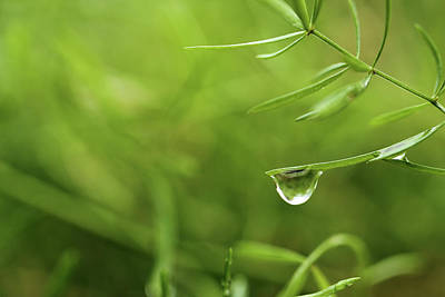 Photograph - Single Water Droplets On Tiny Green Plant Leaf by Prakash Ghai