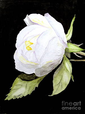 Painting - Single White  Bloom  by Carol Grimes