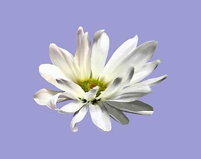 Photograph - Single White Daisy by Susan Savad