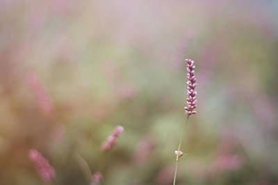 Photograph - Single Wild Flower by Stephanie Hollingsworth