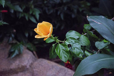 Photograph - Single Yellow Bloom by Michael Bessler