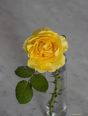 Photograph - Single Yellow Rose With Thorns by Roberta Byram