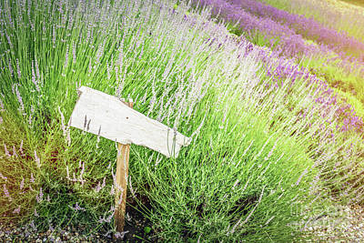 Photograph - Singpost In Grass And Lavender Field. Rustic Board by Michal Bednarek