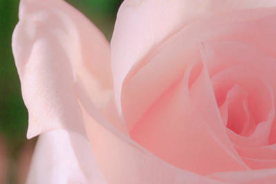 Photograph - Singular Beautiful Pink Rose by Joni Eskridge