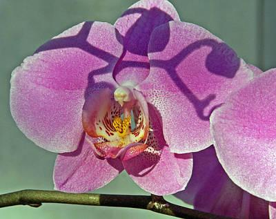 Photograph - Singular Beauty by Lynda Lehmann