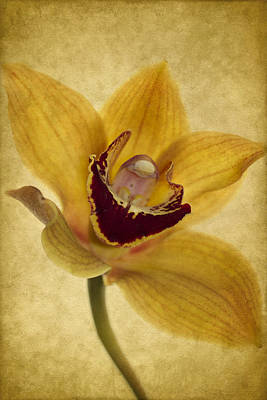 Orchid Wall Art - Photograph - Singular Sensation by Rebecca Cozart
