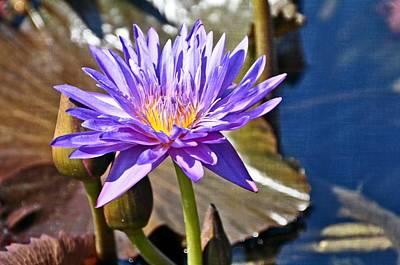 Photograph - Singularly Purple by Marty Koch