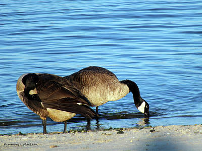 Photograph - Sipping And Preening On The Beach by Kimmary I MacLean
