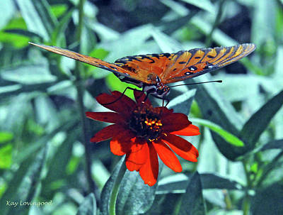 Photograph - Sipping Nectar by Kay Lovingood