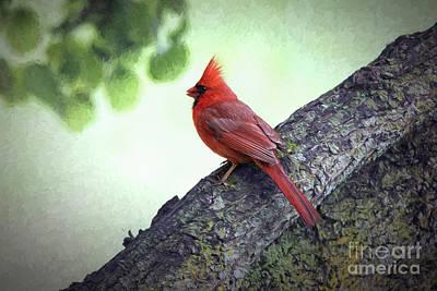 Sir Cardinal Art Print