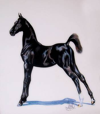 Painting - Sir Clarence Ronald - Saddlebred Colt by Cheryl Poland