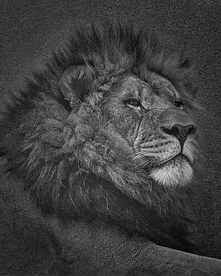 Photograph - Sir Lion by Ernie Echols