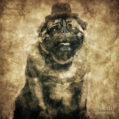 Photograph - Sir Pug Dog In A Cylinder And Bowtie In A Retro Shot. by Michal Bednarek