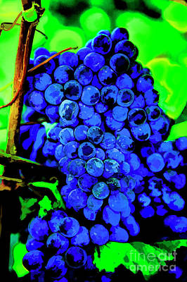Photograph - Sirah Grapes by Rick Bragan