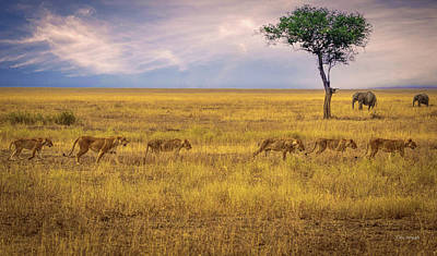 Photograph - Sisters Of The Serengeti by Tim Bryan