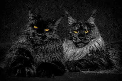 Photograph - Sisters by Robert Sijka