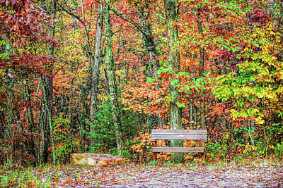 Photograph - Sit And Watch The Leaves Turn by Kerri Farley