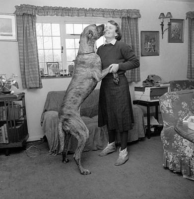 Great Dane Photograph - Sit! by John Drysdale