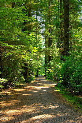 Photograph - Sitka Forest Path by David Andersen