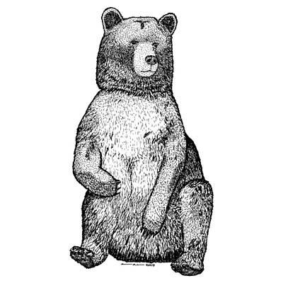 Forrest Drawing - Sitting Bear by Karl Addison
